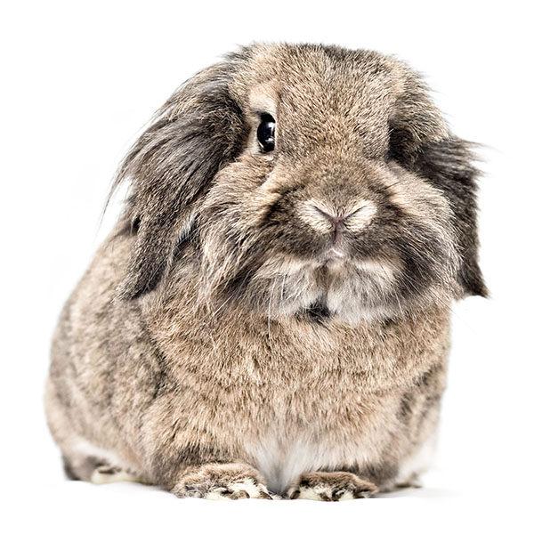conejos enanos toy