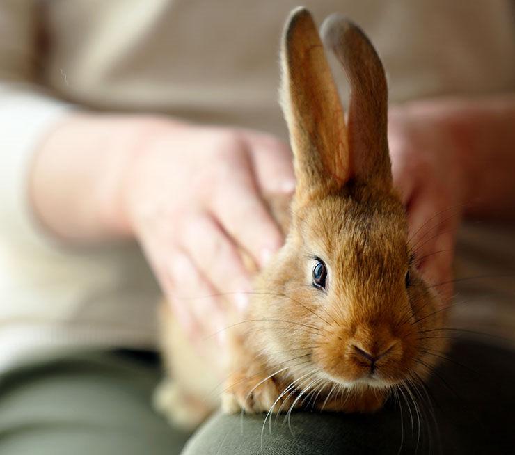 ruidos de conejos