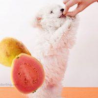 los perros pueden comer guayaba