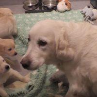 mamá perra educando sus cachorros