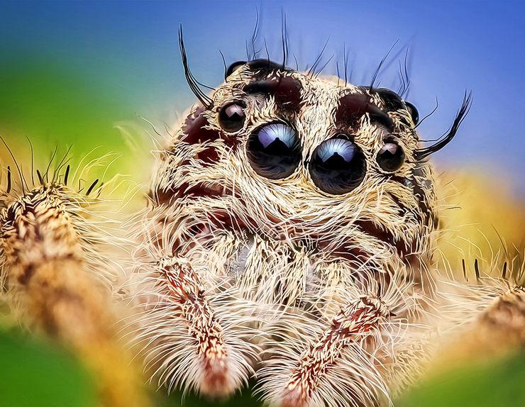 cuantos ojos tienen las arañas