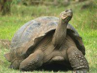 cuánto vive una tortuga