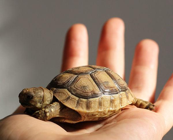 nombres de tortugas macho y hembra