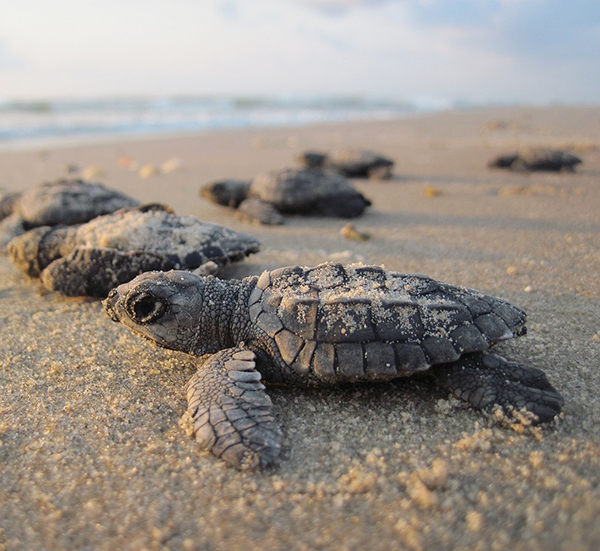 nombres para tortugas