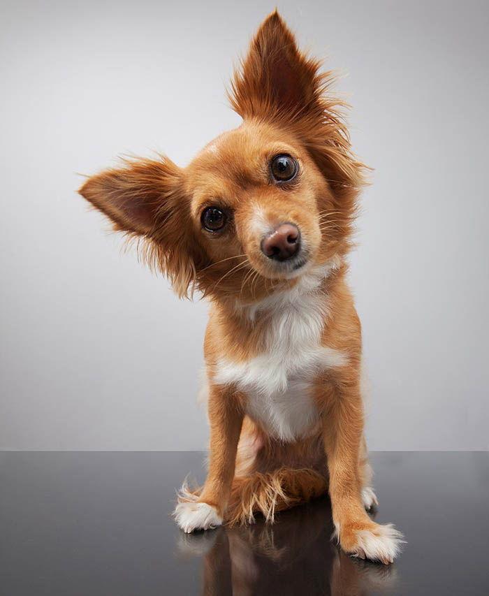 síntomas pulgas en perros