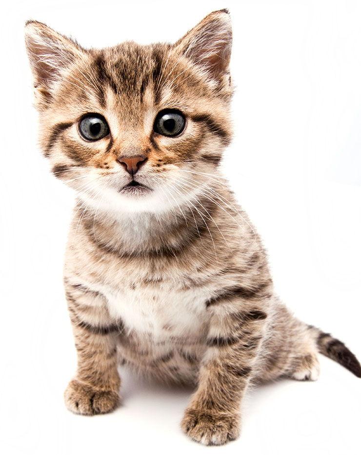 nombres para gatas bebe