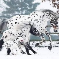 perro y dos caballos