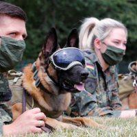 perros detectan coronavirus olfato