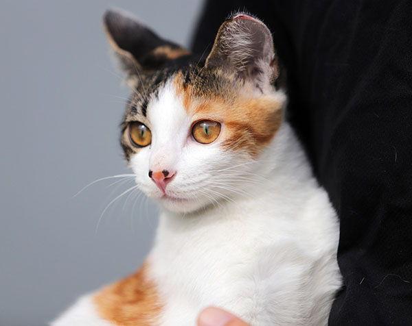 nombres para gatas en japones