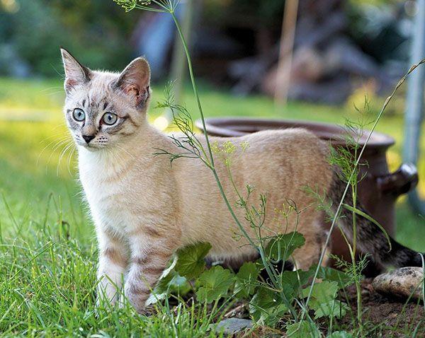 comprar repelente para gatos