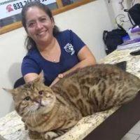 gato bengali gigante andres