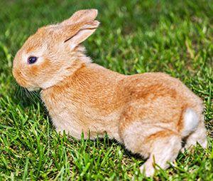 nombres para conejas