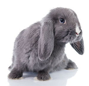 nombres para conejo macho