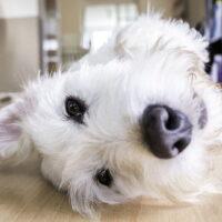 cuantas horas puede estar un perro solo en casa