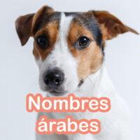nombres arabes para perros