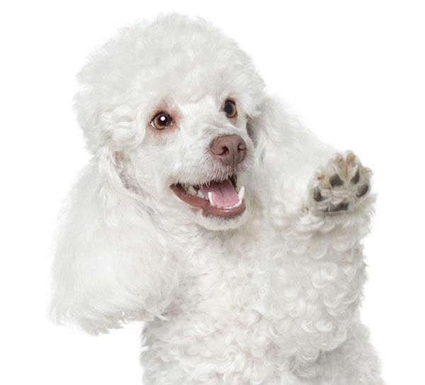 nombres de perra en euskera
