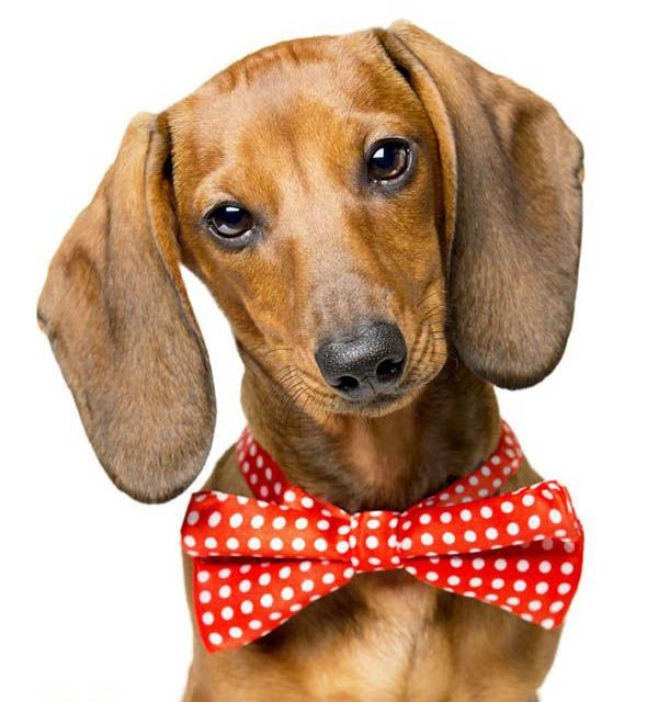 nombres de perros elegantes