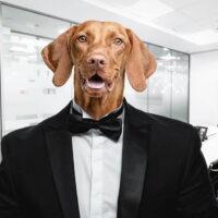 nombres elegantes para perros