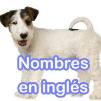 nombres de perros en ingles
