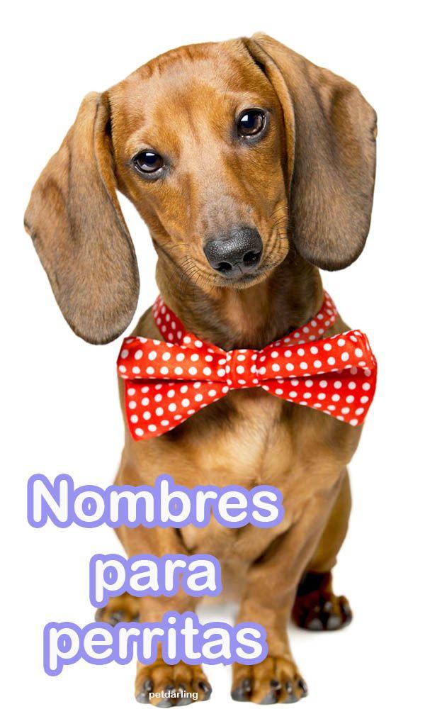 lista nombres para perras