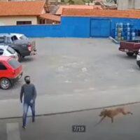 perro atropella joven paso cebra