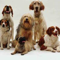nombres para perros medianos